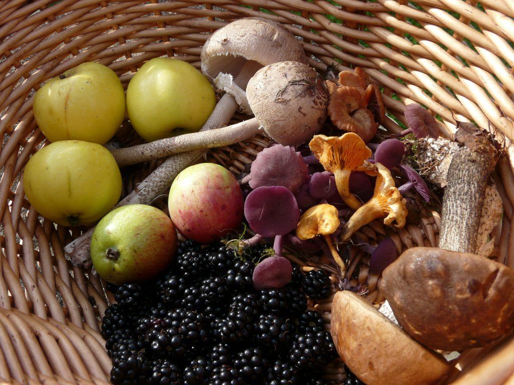 Basket showing edible fungi, crab apples, blackberries